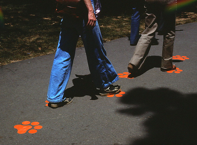 People walking over a trail with colored paw prints on it